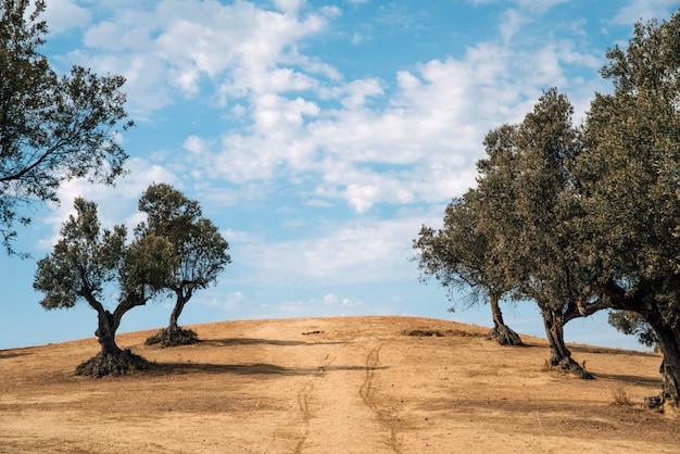 南の田舎 無料写真