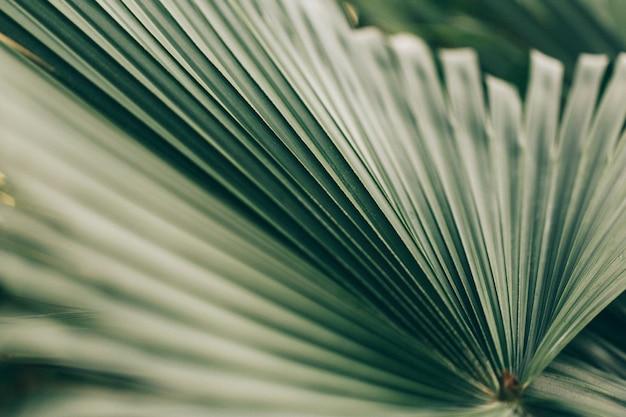 ヤシの木の葉 無料写真
