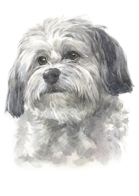 水彩画、長髪の犬、白 - 灰色の毛皮、ハバニーズ種 Premium写真