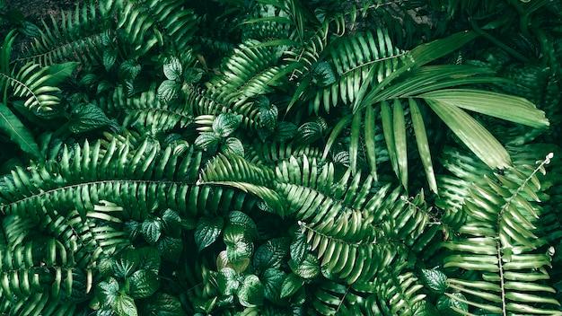 暗いトーンの熱帯の緑の葉。 Premium写真