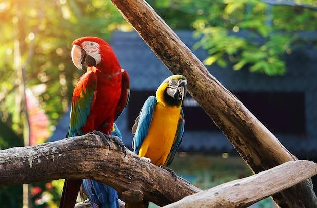 木の枝にカラフルなコンゴウインコ鳥。 Premium写真