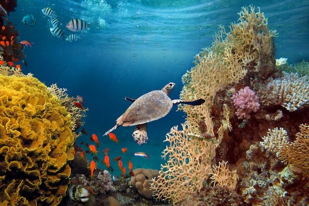 Живительный солнечный свет под водой. солнечные лучи сияют под водой на тропическом коралловом рифе. Premium Фотографии