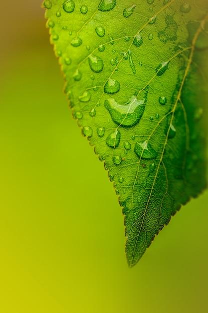 Капли воды на зеленом листе крупным планом Premium Фотографии