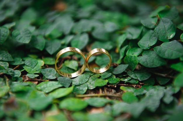 詳細。結婚指輪。秋の自然の太陽を残します。 Premium写真