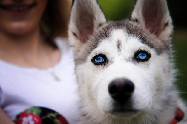 少女と彼女の犬ハスキーが公園を散歩 Premium写真