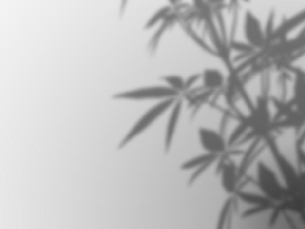 白い壁にデフォーカス植物の影 無料写真
