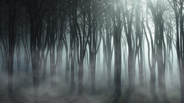 霧の森の風景 無料写真