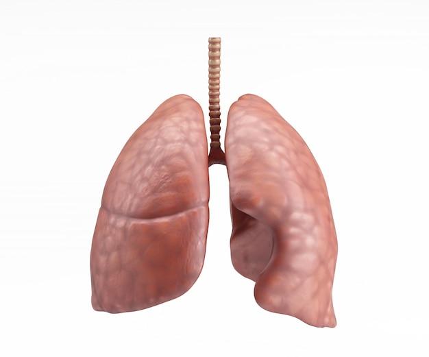 人間の肺のデザイン 無料写真