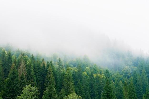 Горные склоны, лес, холмы, утренний туман Premium Фотографии