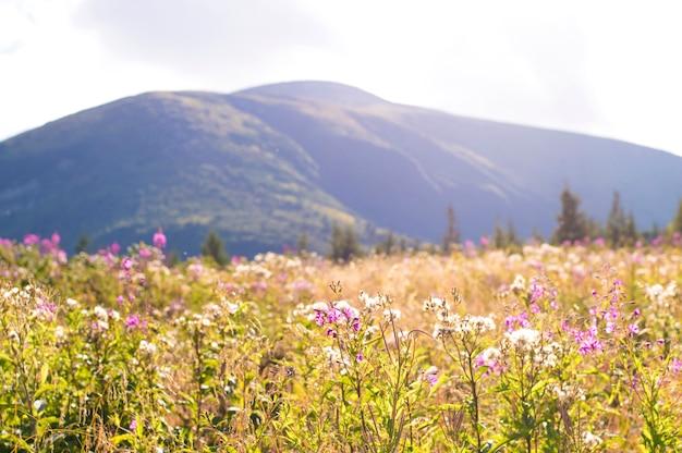 山を背景に紫の花 Premium写真