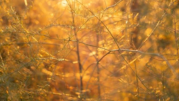 森の中にオレンジ色の光があります Premium写真