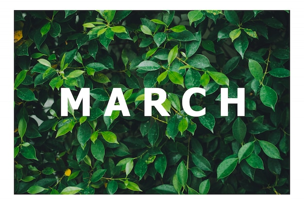 カレンダー月のリスト自然の緑の葉の背景に設計されています Premium写真