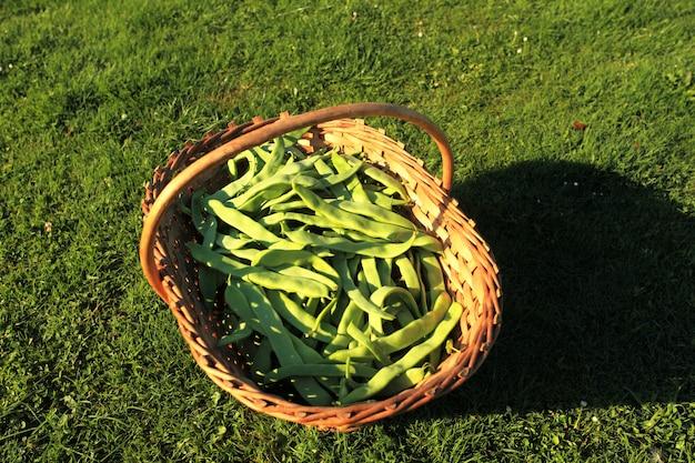 平らなインゲンと籐のバスケットの庭で紫 Premium写真