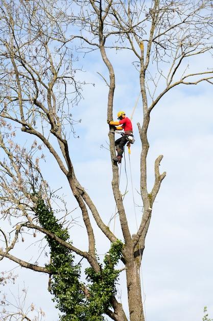 アーボリストのチェーンソーで木を切る Premium写真