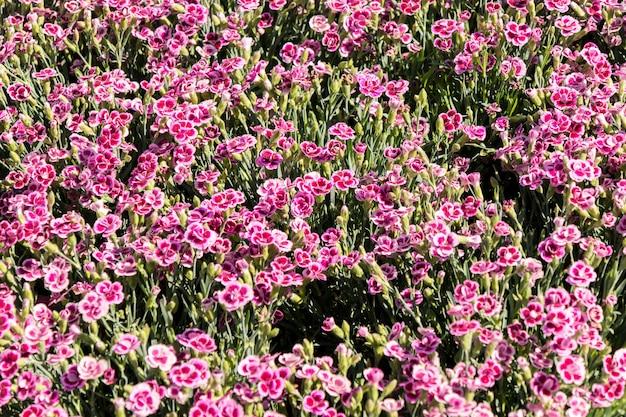 春のフラワーマーケットの花とカラフルなカーネーション Premium写真