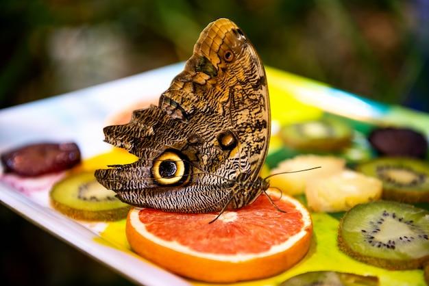 ぼやけた明るい果物の上に座って美しい大きな蝶 Premium写真