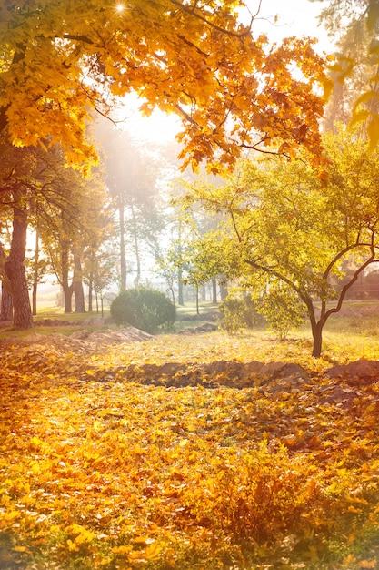 公園の紅葉の背景 Premium写真