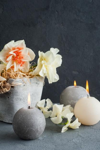 Нарциссы в цветочном горшке на темном бетоне Premium Фотографии