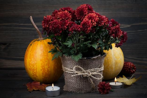 赤い菊の花の鍋 Premium写真