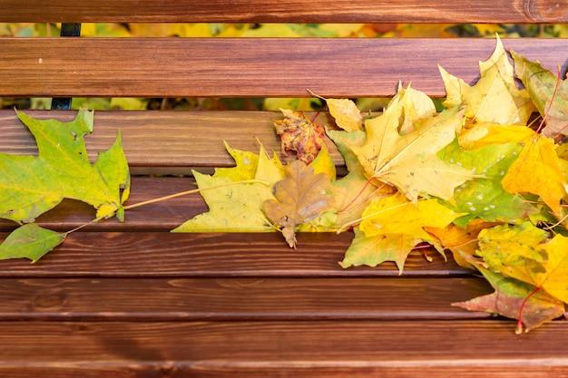 カエデの葉が公園のベンチに Premium写真