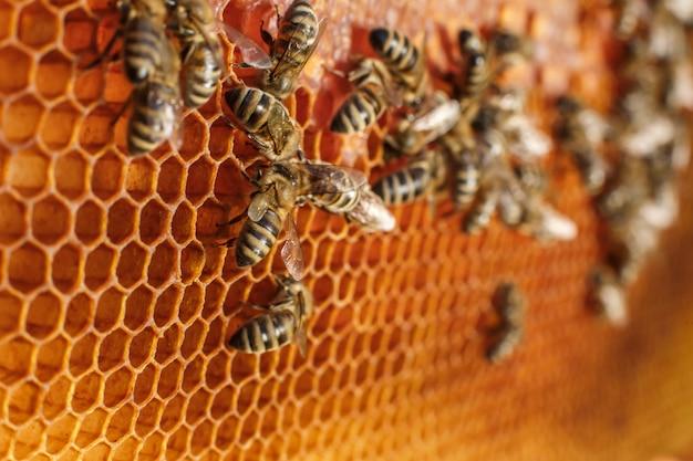 Закройте вверх по сотам в деревянной рамке с пчелами на ем Premium Фотографии