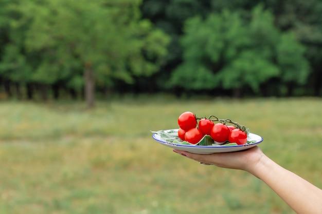 Женщина держать тарелку со свежими помидорами. овощная тарелка для пикника в лесу Premium Фотографии