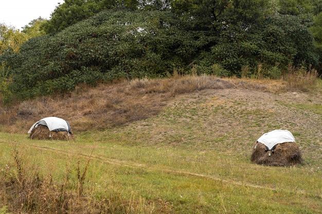Скошенная трава на поле укладывается. накрыть целлофаном. Premium Фотографии