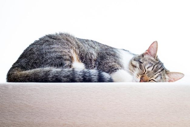 自宅のマットレスで寝ているかわいい子猫 Premium写真