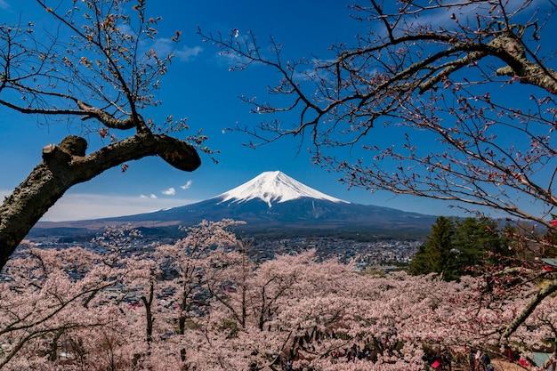 山春の間に富士が河口湖藤吉田で桜の花を咲かせる。 Premium写真