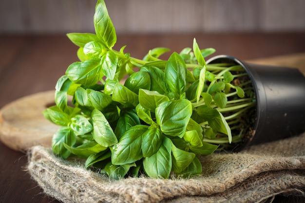 新鮮なバジル植物 Premium写真