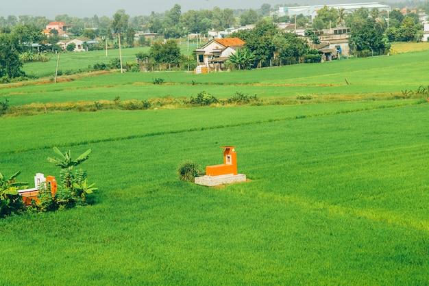ベトナムの田んぼ Premium写真