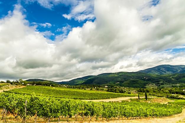 Престижный виноградник в сельской местности кьянти (тоскана, италия) Premium Фотографии