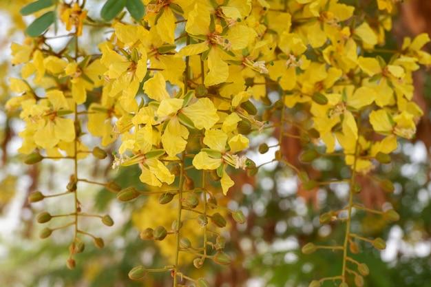 銅のポッドの花 Premium写真