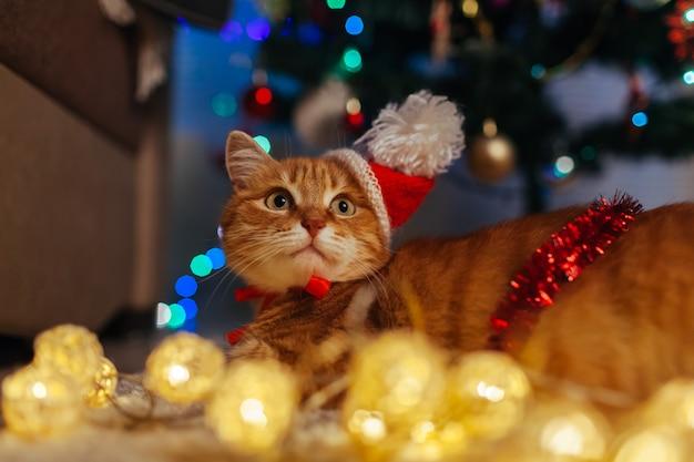 Рыжий кот носит шляпу санта-клауса под елкой, играя с огнями Premium Фотографии