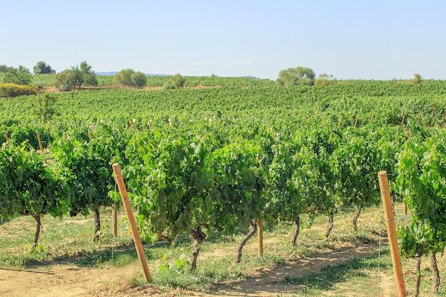 スペインのカタロニアのブドウ畑の風景。 Premium写真