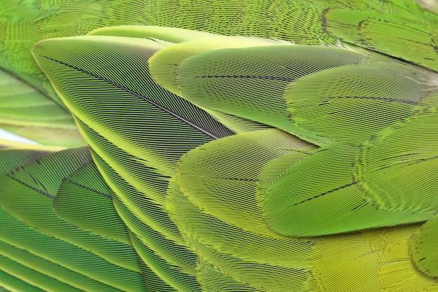 Красивый фон перья попугая Premium Фотографии
