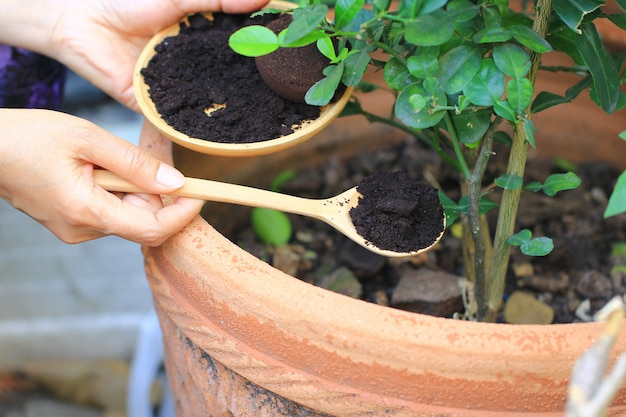 コーヒー挽き、コーヒー残渣は木に塗布され、天然肥料です、園芸趣味 Premium写真
