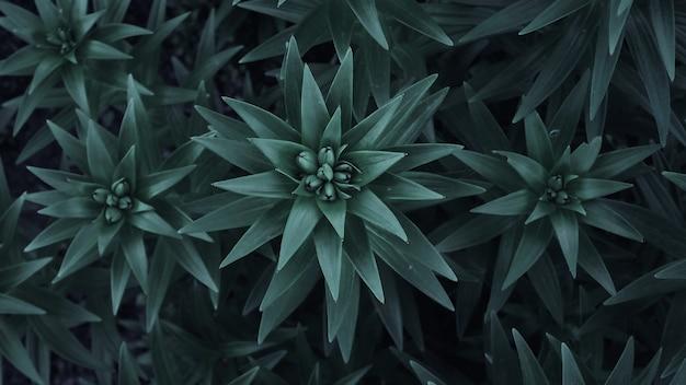 庭のユリの茎と葉。もやしユリをクローズアップ。 Premium写真