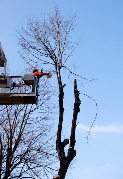 木を剪定するクレーンの労働者 Premium写真