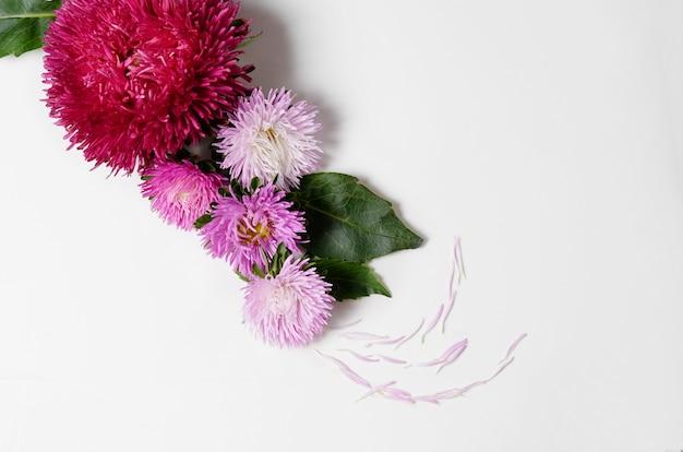 菊とダリアの花を持つ創造的な背景。花柄ボーダーフラットレイアウトのコンセプト Premium写真