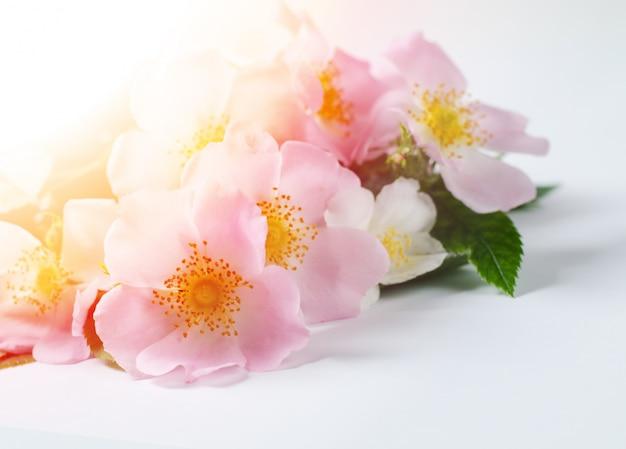 白の美しいドージェバラの花 Premium写真
