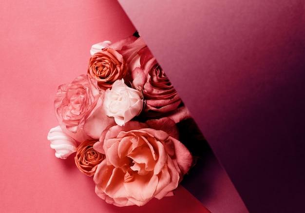 Розы, изолированные на фиолетовом градиенте Premium Фотографии