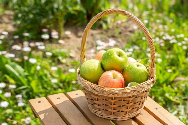 木製のテーブルの上の枝編み細工品バスケットの青リンゴ庭の緑の芝生収穫時期素朴なスタイル Premium写真