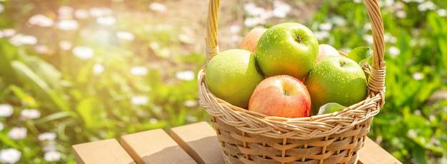 木製のテーブルの上の枝編み細工品バスケットの緑と赤のりんご庭の緑の芝生収穫時期の水平バナー Premium写真