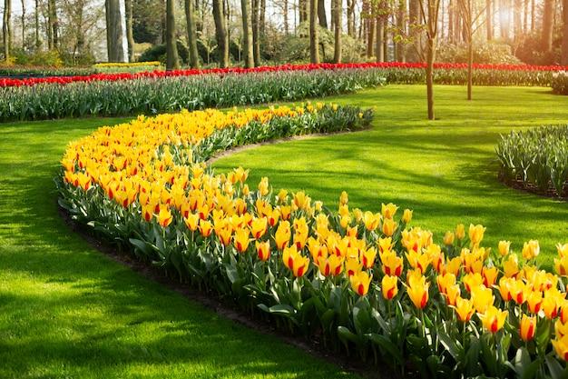 Красивые весенние тюльпаны цветы в парке в солнечный день Premium Фотографии