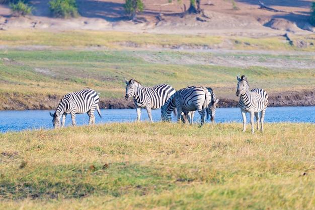 Сафари дикой природы в африканских национальных парках. Premium Фотографии