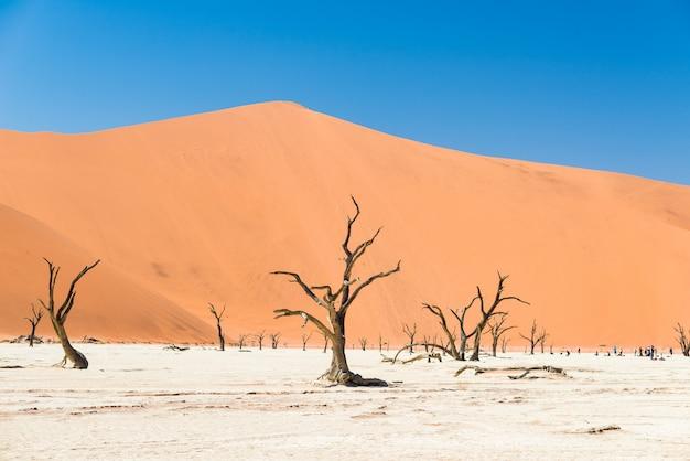 Живописная соссусвлей и дедвлей, глиняно-соляная кастрюля с плетеными акациями, окруженные величественными песчаными дюнами. Premium Фотографии