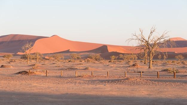 雄大な砂丘に囲まれたアカシアの木を編んだ風光明媚なソーサスフレイとデッドヴレイ、粘土とソルトパン Premium写真