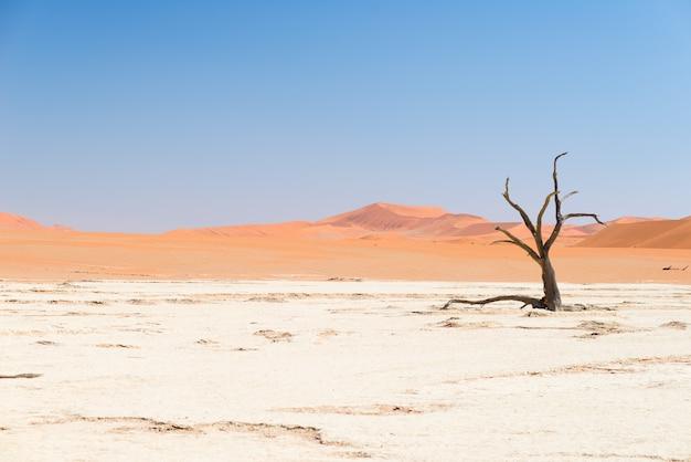 Живописная соссусвлей и дедвлей, глиняно-соляная кастрюля с плетеными акациями в окружении величественных песчаных дюн Premium Фотографии