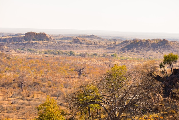 マプングブウェ国立公園の砂漠の風景、南アフリカの控えめながら雄大な旅行先。赤い砂岩の崖のあるアカシアと巨大なバオバブの木を編んだ。 Premium写真